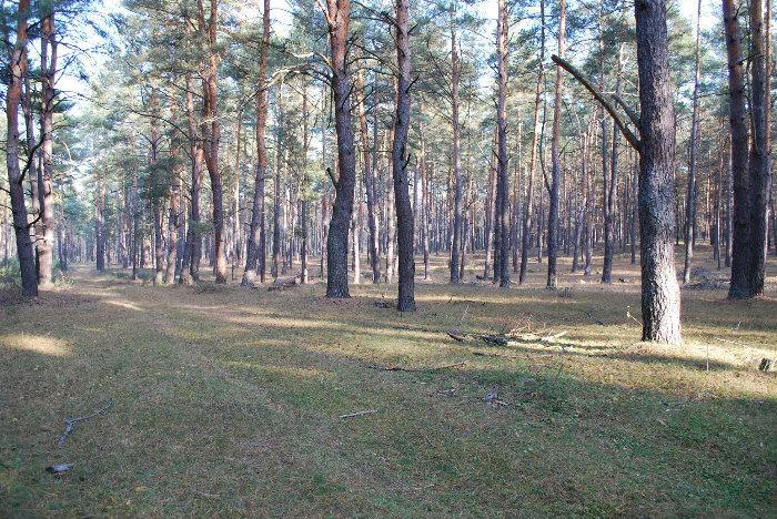 Херсонщина в топ-25 природних див України